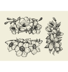 Flower Hand drawn sketch tutsan hypericum vector