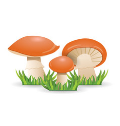 Mushrooms slippery jacks vegetable healthy food vector
