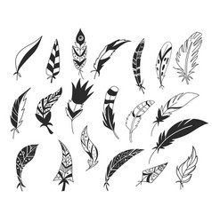 rustic decorative feathers hand drawn vintage vector image