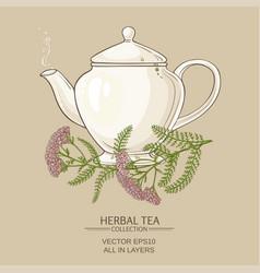 yarrow tea in teapot vector image