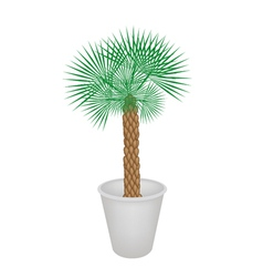 A Palm Tree in Flower Pot vector image