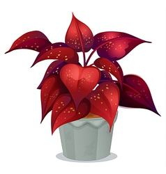A plant with red leaves vector image