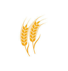 agriculture wheat template icon design vector image