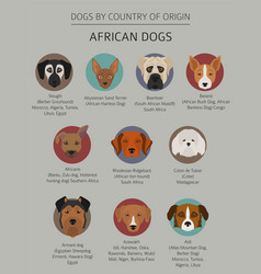 Dogs country origin african dog breeds vector