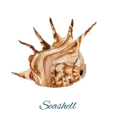 Seashell watercolor painting on white background vector