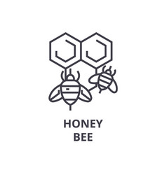 honey bee line icon outline sign linear symbol vector image
