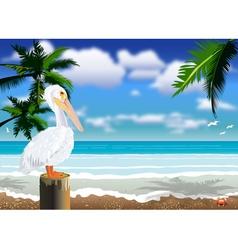 Pelican beach 2 vector image vector image