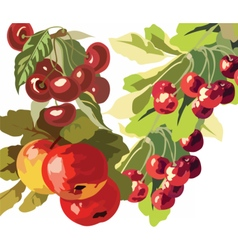 Apple and Cherry fruits Watercolor vector