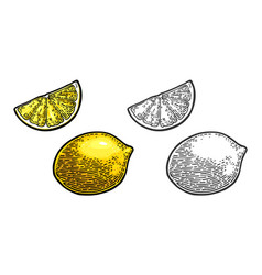 Lemon slice and whole black and color vector