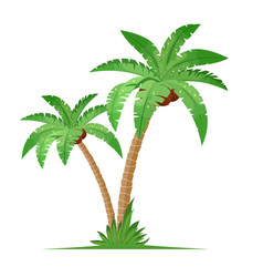 Two coconut palm trees with grass vector