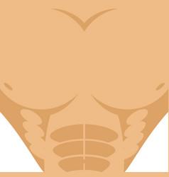 male torso athletic man chest abdomen strong vector image