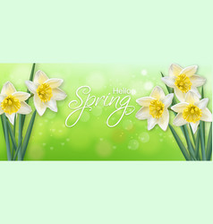 daffodil spring flowers realistic delicate vector image