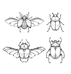 Hand drawn insect with wing vector image