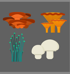 mushrooms for cook food and poisonous nature meal vector image