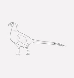 pheasant icon line element of vector image