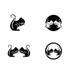 Squirrel logo template vector