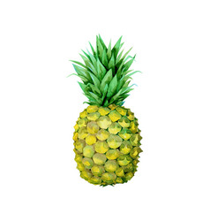 the isolated fruit yellow painting pineapple vector image