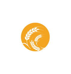 Agriculture wheat template icon design vector