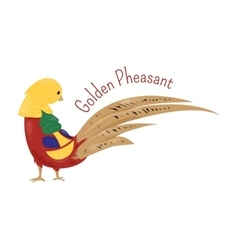 Cartoon golden or Chinese pheasant isolated on vector