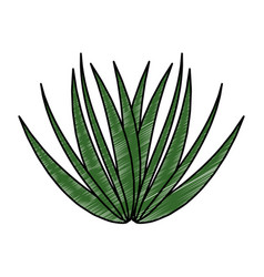 Palm leaf isolated icon vector