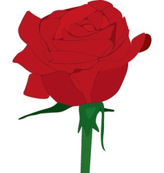 rose vector image vector image