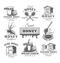 set vintage honey labels vector image