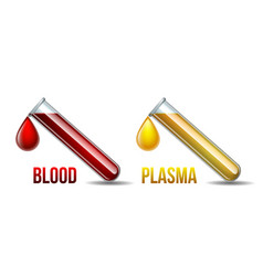 Test tube with drop blood and blood plasma vector