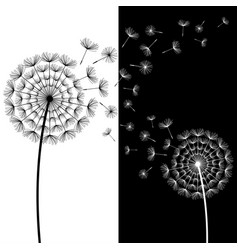 black and white dandelion blowing vector image vector image