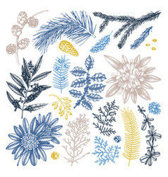 Evergreen trees and shrubs collection vintage vector