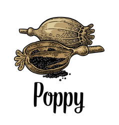 Poppy heads and seeds black vintage vector