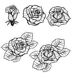 Set of old school tattoo style roses isolated on vector