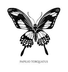 set hand drawn black and white papilio vector image