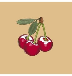 Cherry in vintage style Colored vector image vector image