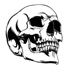 Akos Skull 1 vector image