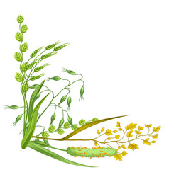 Corner with herbs and cereal grass floral design vector