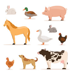 Different domestic animals on farm geese ducks vector