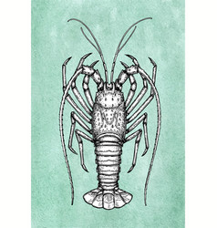 Ink sketch of spiny lobster vector