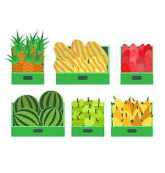 Watermelon and melon pineapple apple set vector
