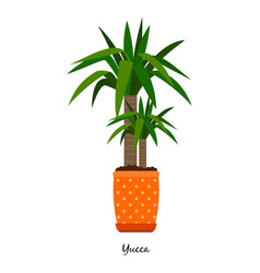 Yucca plant in pot vector