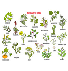 Anthelmintic or antihelminthic herbs collection vector