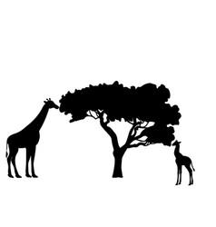 Giraffe and giraffe cub mammal silhouette animal vector