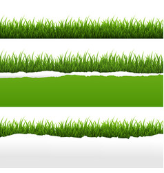 green grass and ripped paper white background set vector image