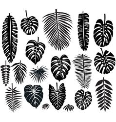 Set tropical leaves vector