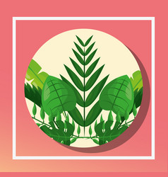 tropical leaves round banner foliage decoration vector image