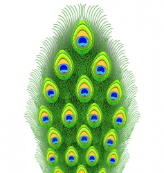 peacock feathers illustration vector image vector image