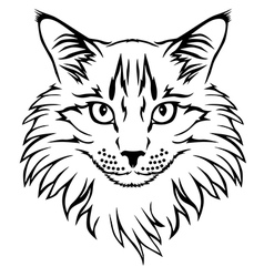 contour cat vector image vector image