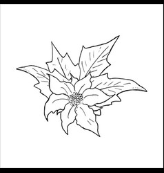 poinsettia flower hand drawn icon outline sketch vector image