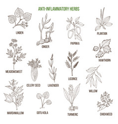 anti-inflammatory herbs hand drawn set of vector image