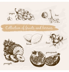 Collection of fruits and berries vector