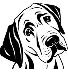 Labrador dog vector